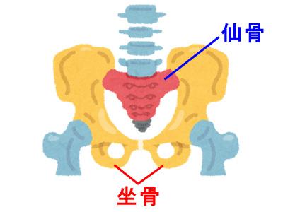 仙骨と坐骨